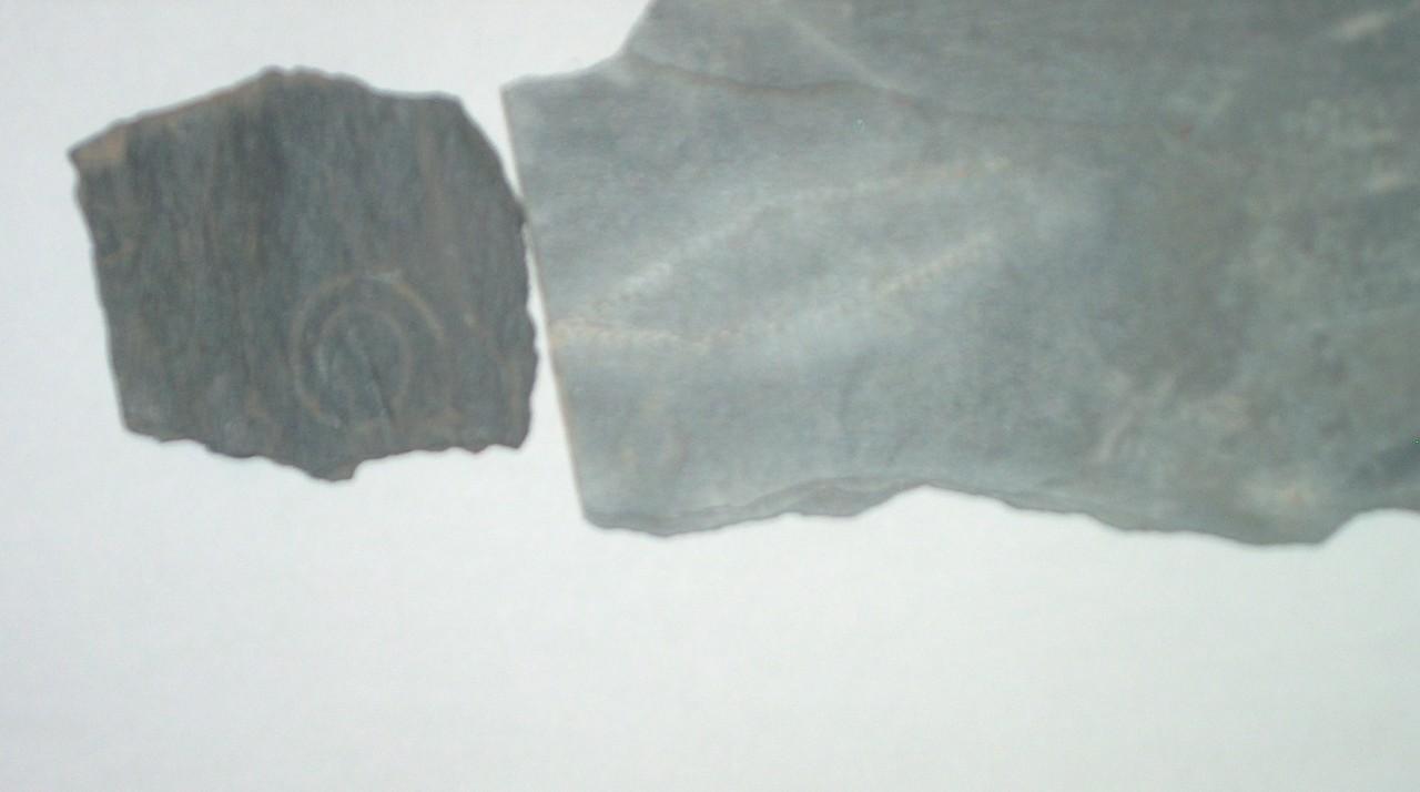 1-graftolitos-fosilizados