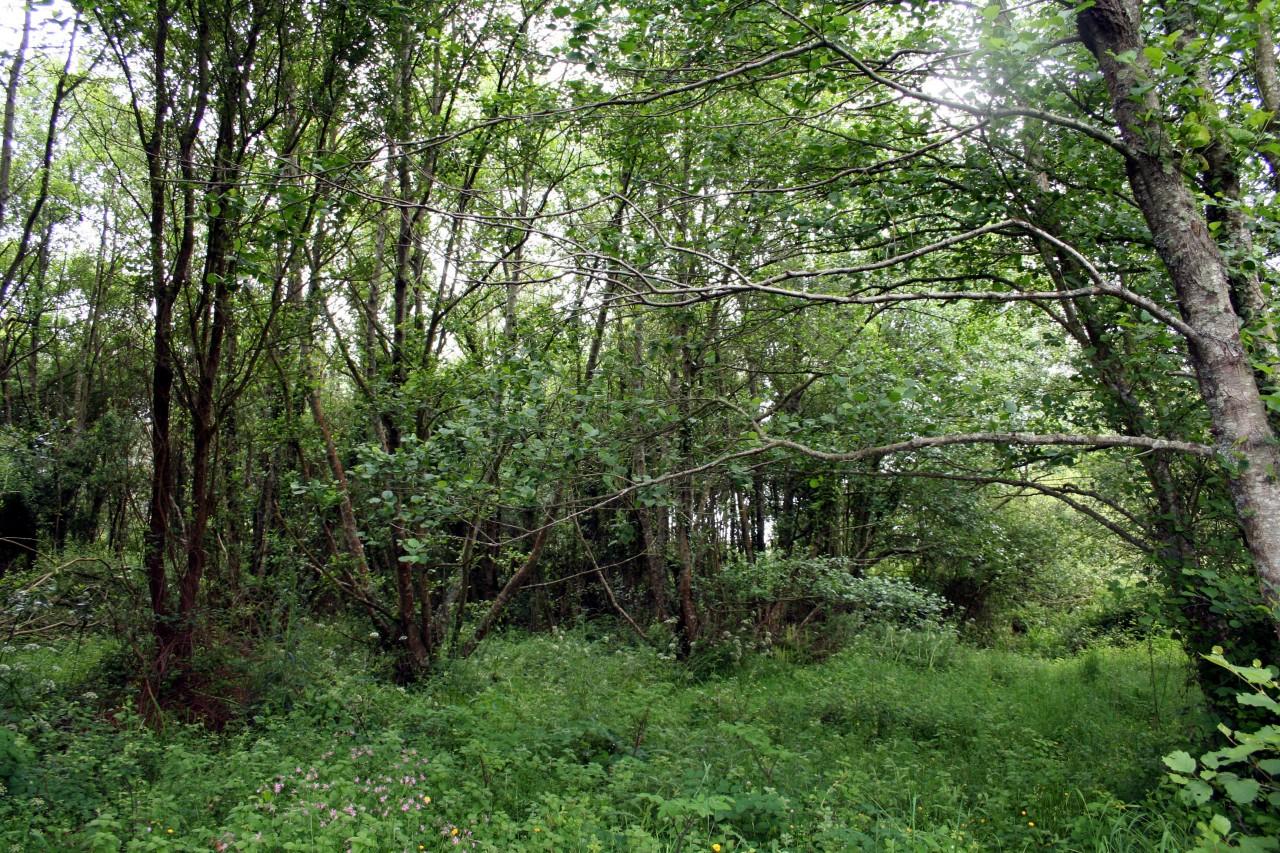 10-frondosidade-do-bosque-de-galeria