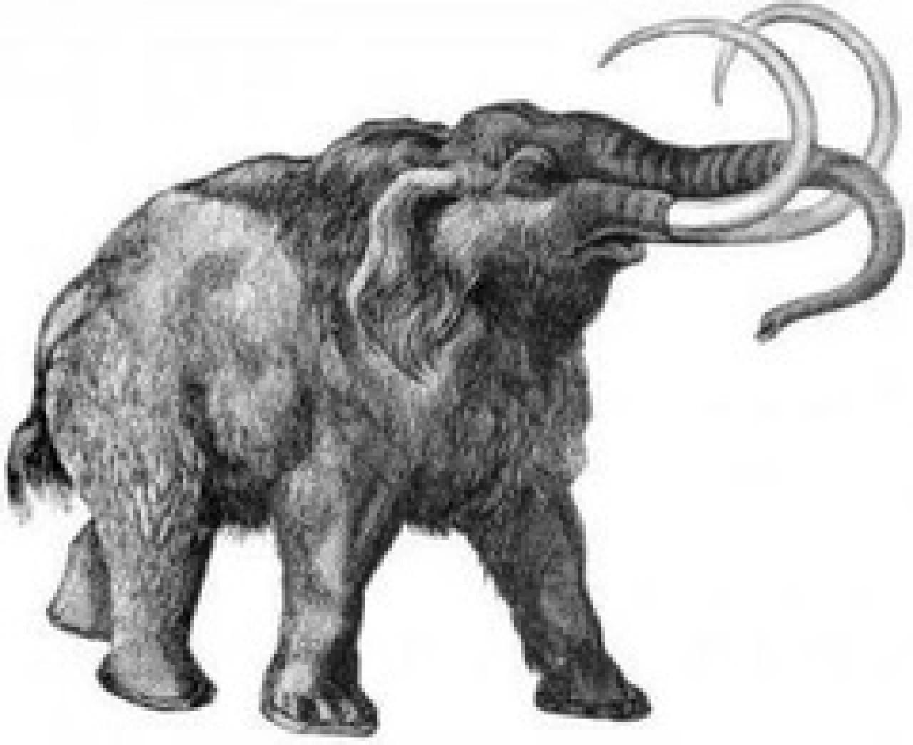 16-mamut