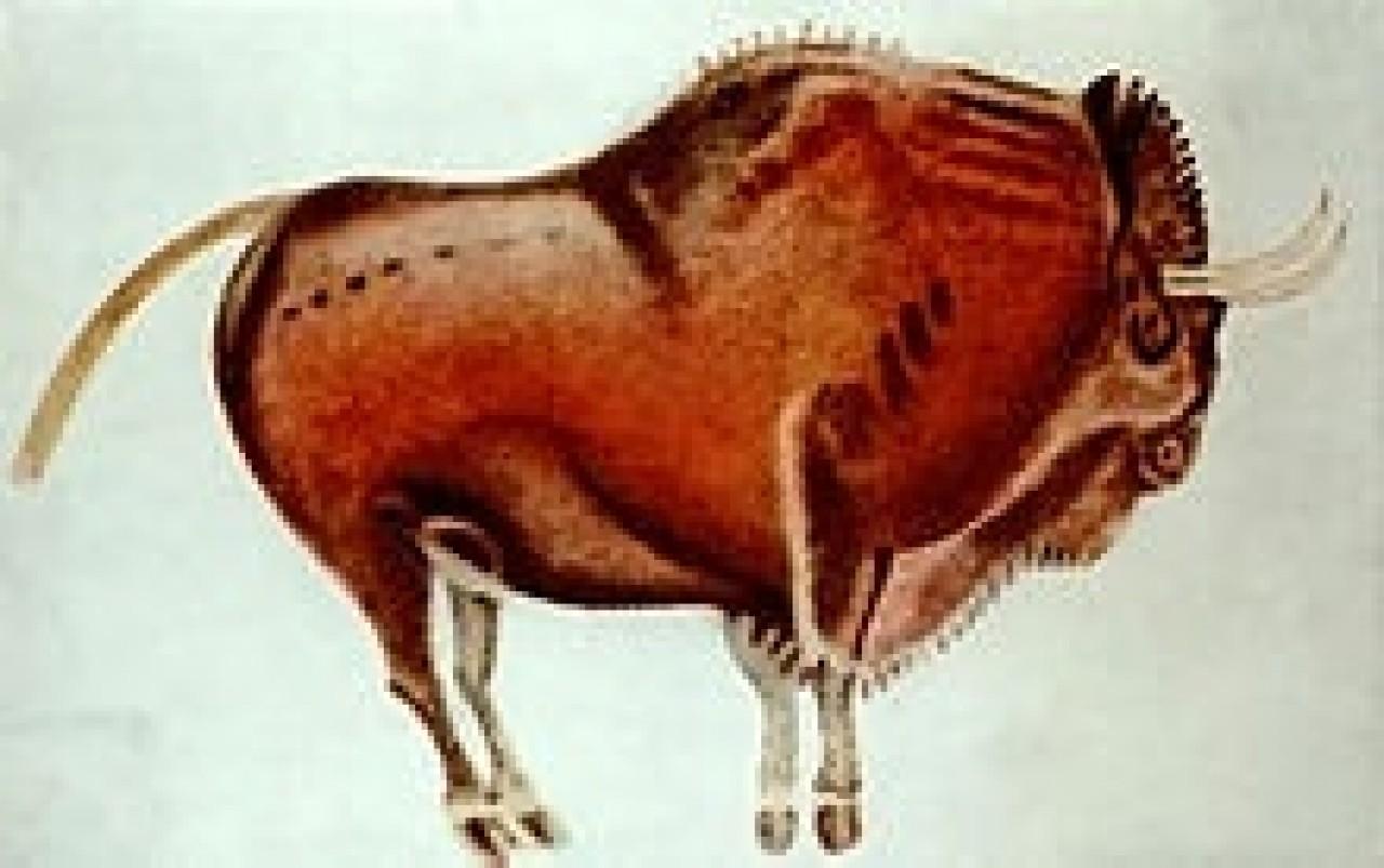 18-bisonte