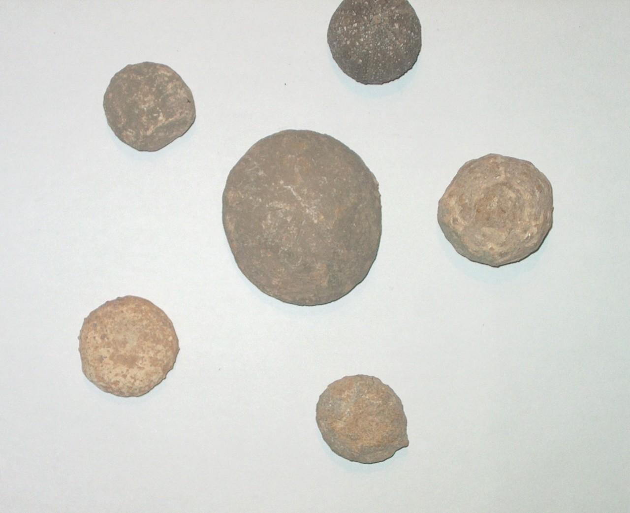 2-erizos-fosilizados