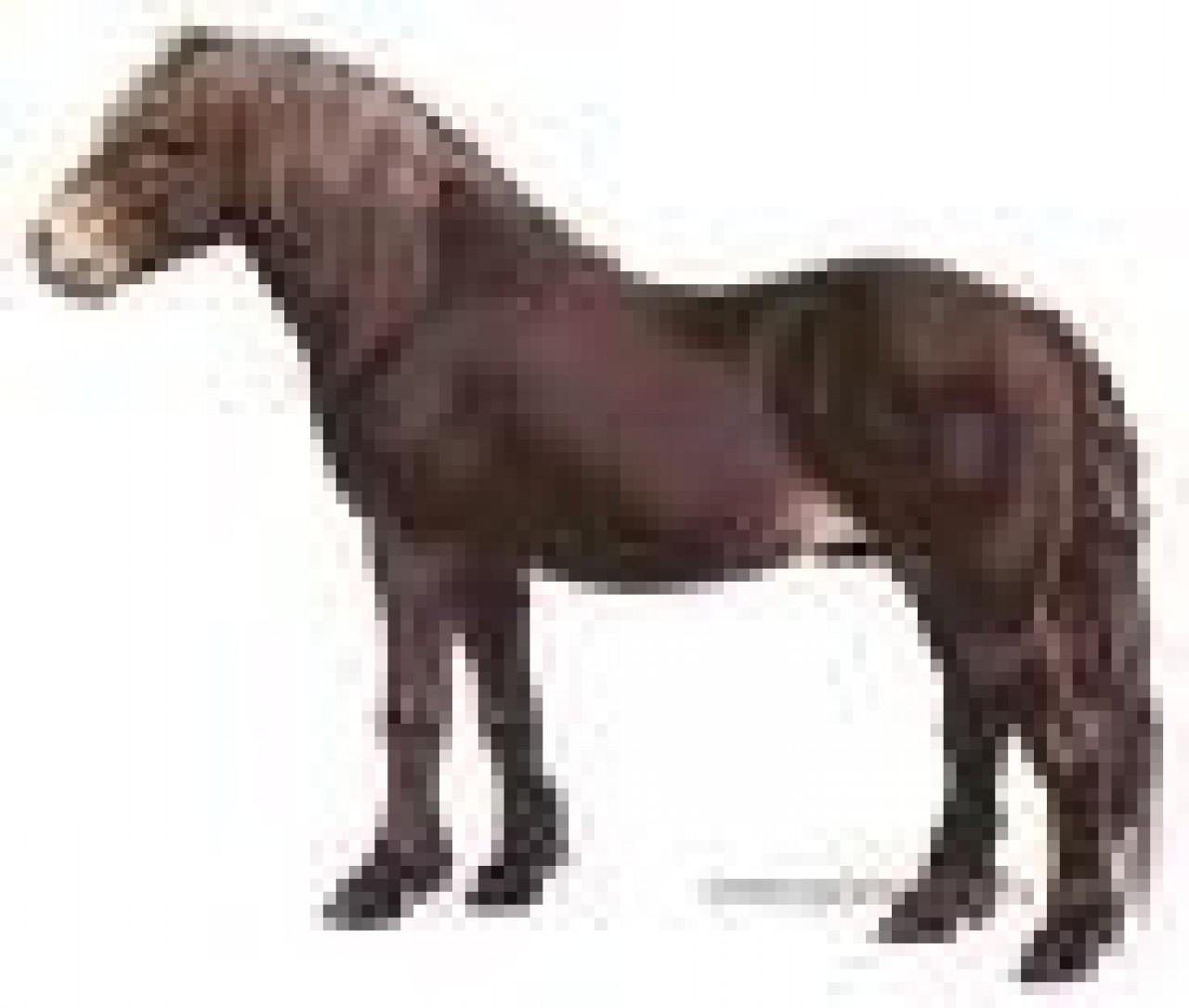 23-caballo