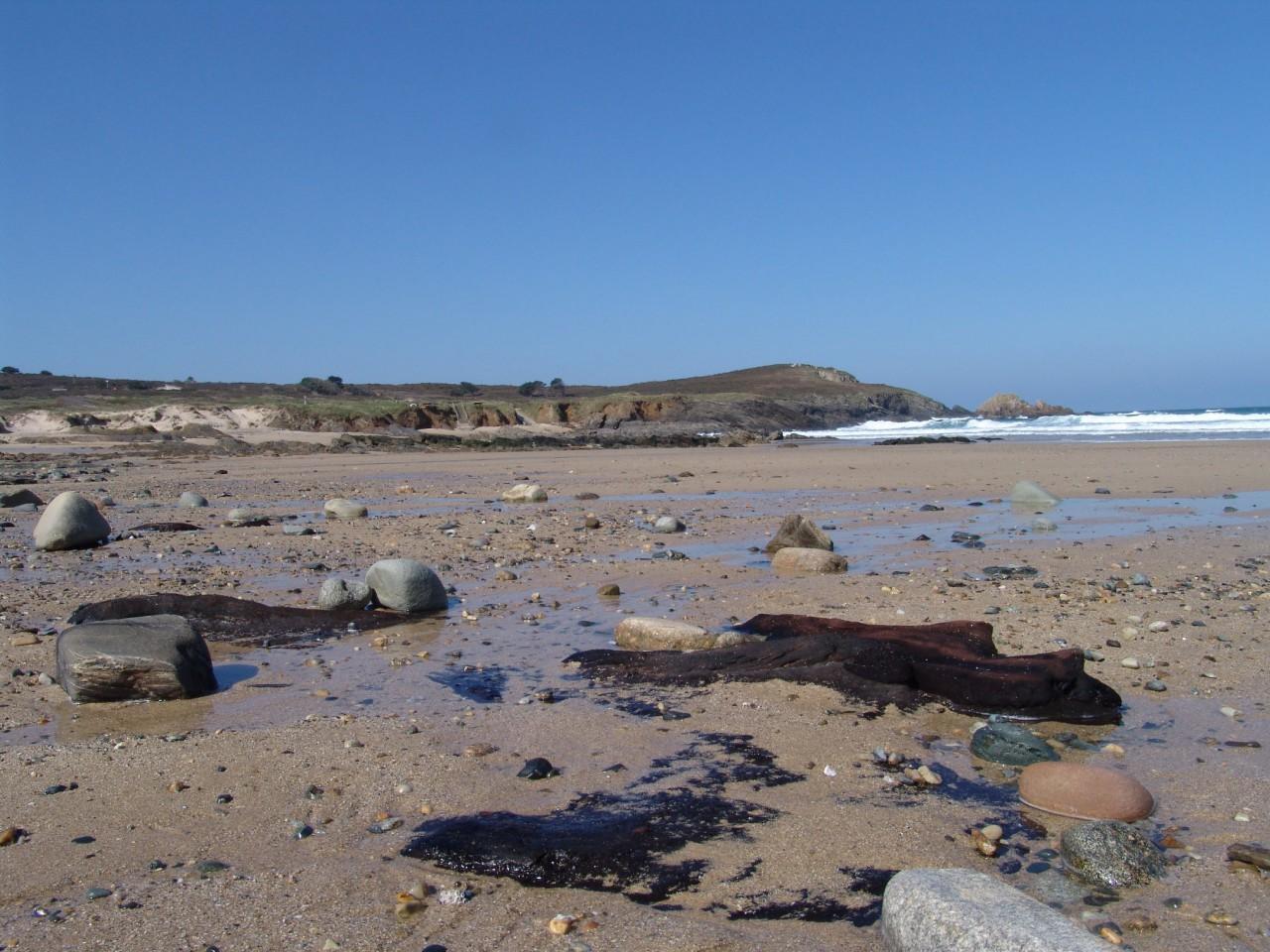 Restos de un bosque carbonizado en la playa de Ponzos (marzo 2016)