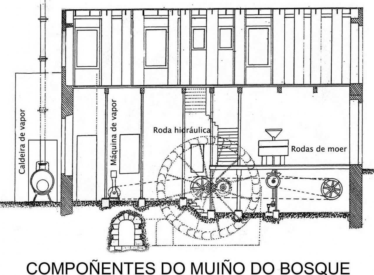 componentes molino bosque