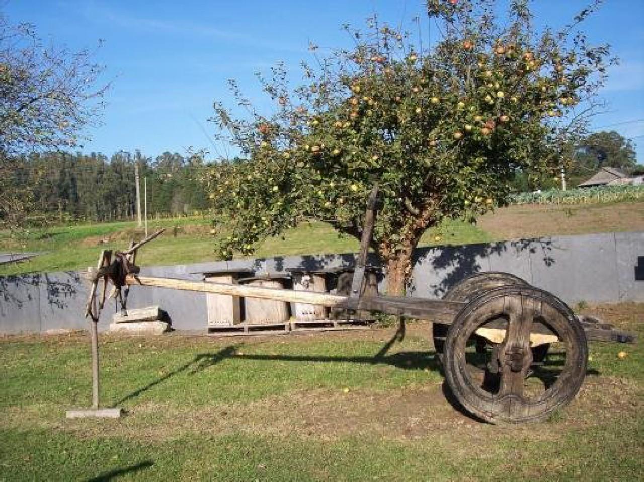 Carro do país. Museo etnográfico da Capela