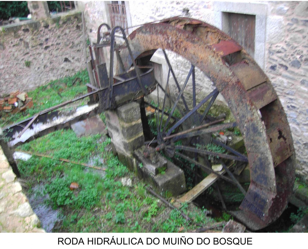 rueda hidraulica molino bosque